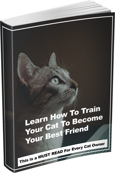 Learn-How-to-train-your-cat-copy.png